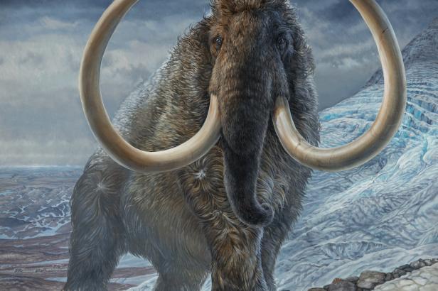 Člověk je v tom nevinně. Výzkum odhalil pravou příčinu vymření mamutů