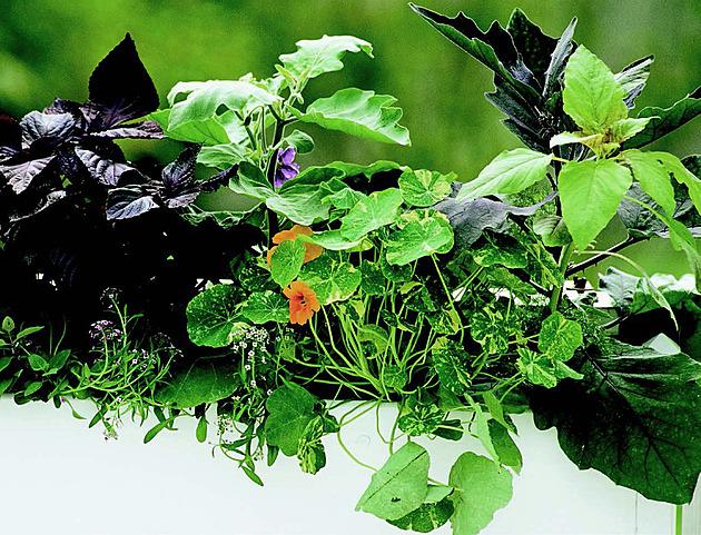 Nemáte zahradu? Nevadí, krásnou úrodu vypěstujete i na balkoně