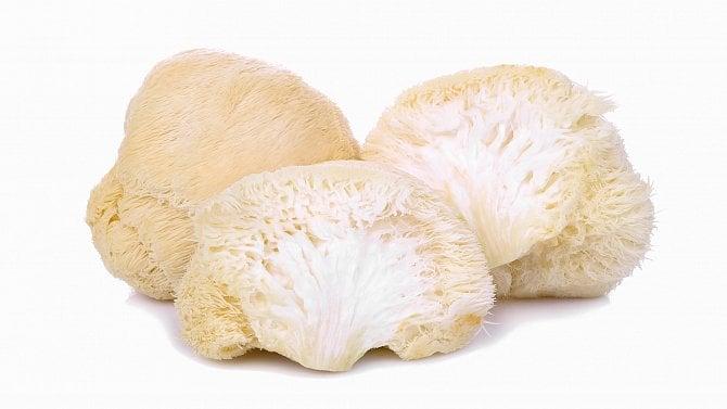 Korálovecježatý– léčivá houba se pěstuje ivČR. Prodej začne vlétě