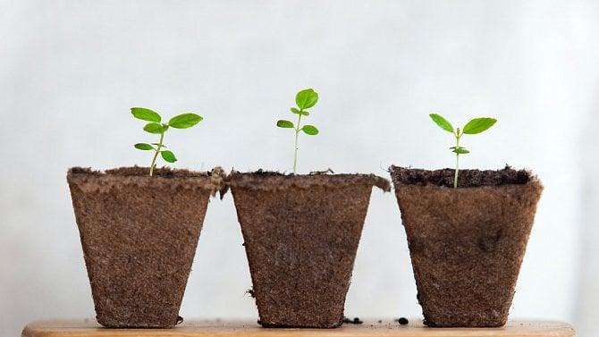 Vědci mají řešení proti plísním, ochrání rostliny bez chemikálií