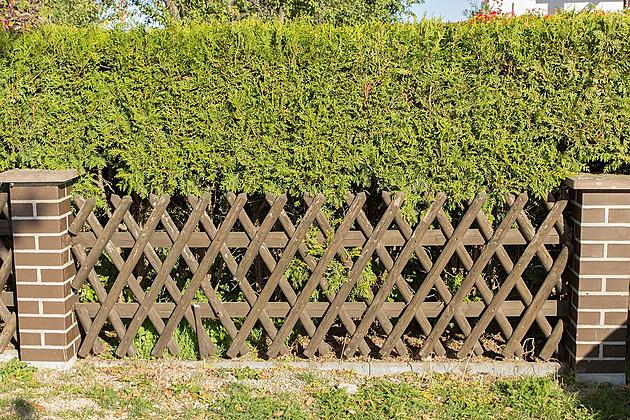 Sousedův živý plot se prodírá k nám a ničí naše túje. Musíme ho stříhat?