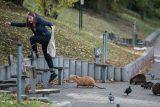 Přemnožené nutrie už zaútočily na psy i lidi. 'Dostaly se do Česka přes kožešinové farmy'' říká odborník