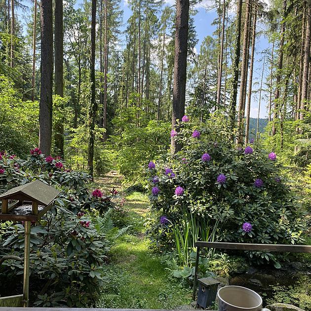 V lesní zahradě, kde bojovali i s kůrovcem, dnes vládne letní idylka