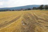 Kvůli vlhku a podmáčené půdě nemohou zemědělci sklízet. Postupně sčítají ztráty
